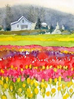 Bright Tulip Fields (LaConnor)